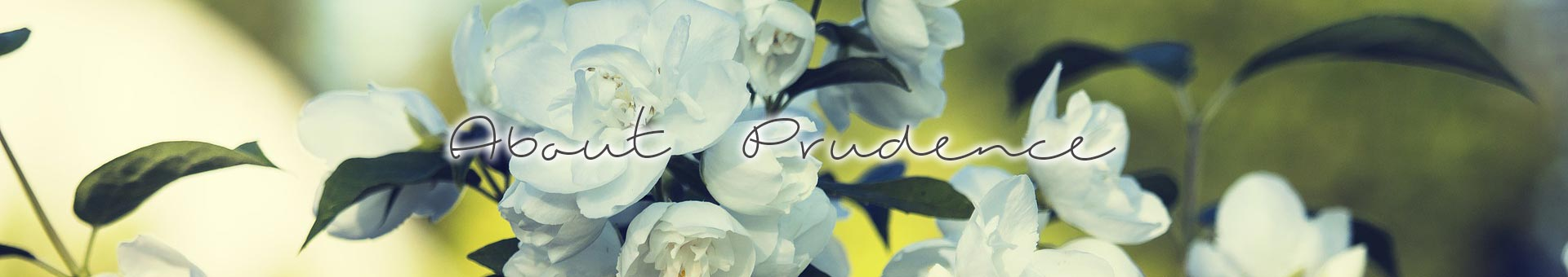 PageBanners-AboutPrue